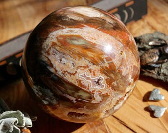 Huge Petrified Wood Sphere 4.3 pounds 113mm