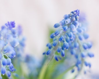 Styled Stock Photography | Spring Florals | Muscari | Pantone Color of The Year | Rose Quartz & Serenity | Instant Download