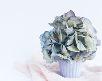 Styled Stock Photography | Spring Florals | Hydrangeas | Pantone Color of The Year | Rose Quartz & Serenity | Instant Download