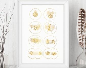 6f7faffc2592 Mitosis Gold Foil Print - Gold Print