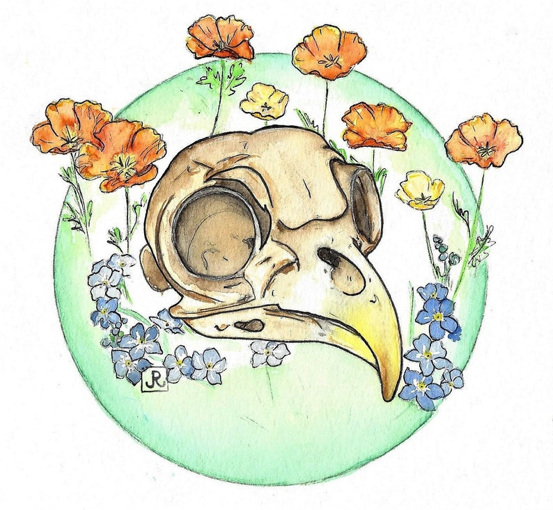 Owl and Poppies Sticker