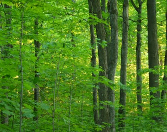 Fine art photography. Forest. Summer. Photo of tree. Green. Decoration.