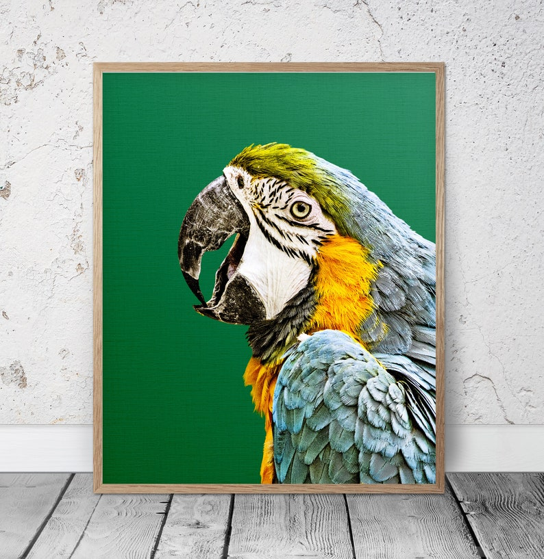 TROPICAL BIRDS MACAW PARROT ANIMAL POSTER PICTURE PRINT Sizes A5 to A0 **NEW**