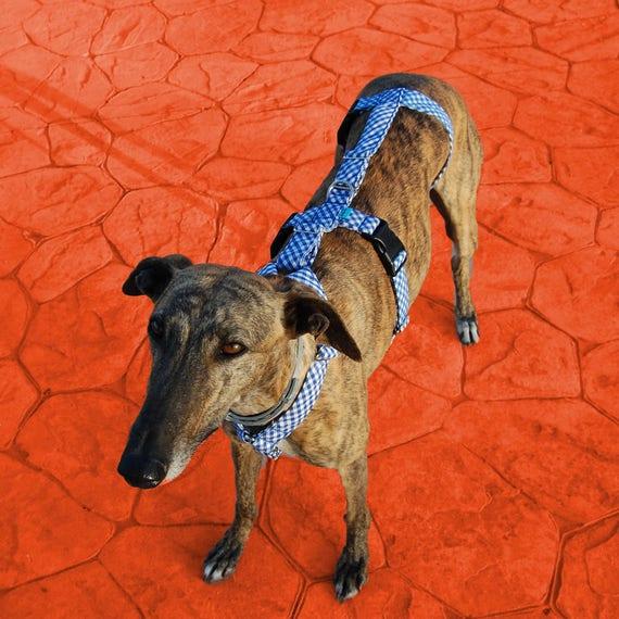 Windhund Geschirr / Hund Geschirr / Galgos Geschirre / harness   Etsy