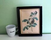 Vintage Pink Rose Art Print, Flower Print, Wall Decor, French Decor, Print on Silk, Garden Print, Rosa centifolia Rosier à cent feuilles