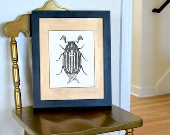 """Striped June Beetle Freehand Ink Drawing Limited Edition Print, Signed, Numbered 8""""x10"""""""