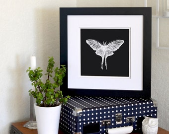 "Luna Moth Inverted Freehand Ink Drawing Limited Edition Print, Signed, Numbered 8"" x 8"""