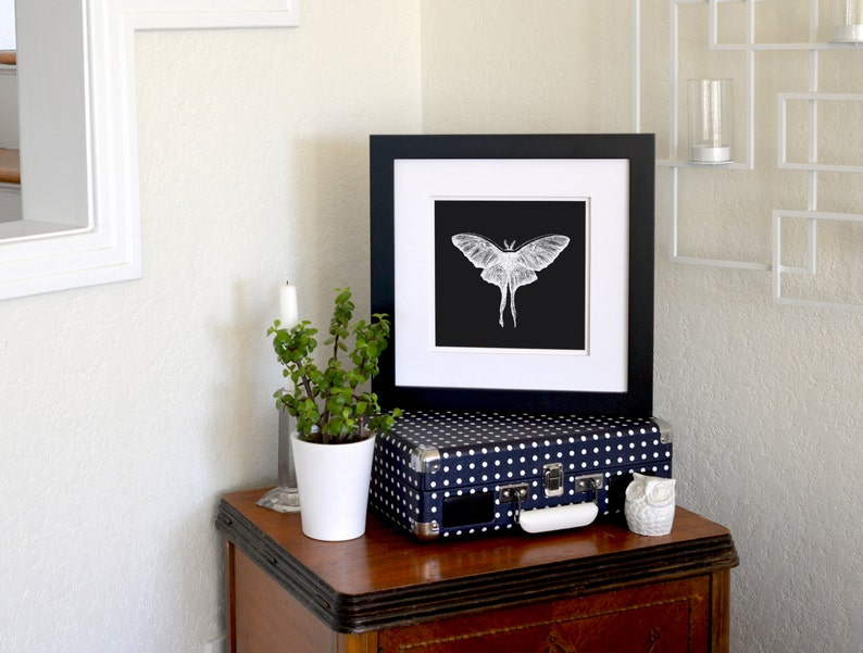 Luna Moth Inverted Freehand Ink Drawing Limited Edition Print image 0