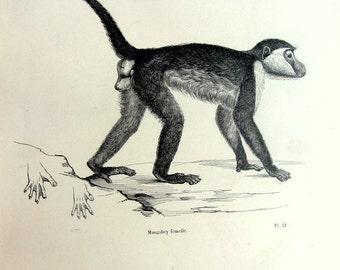 Primaten | Etsy