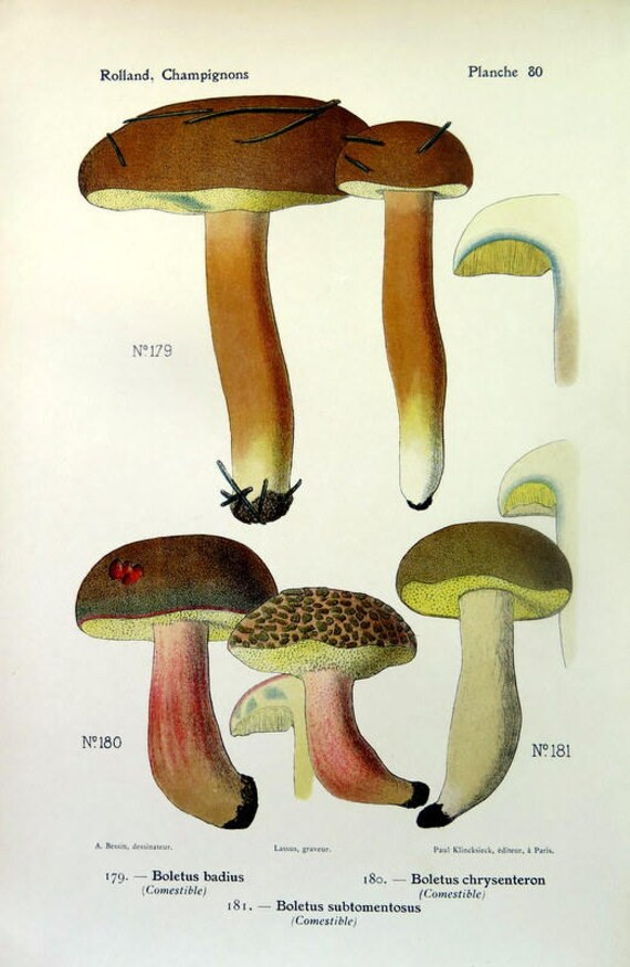 Antique Color 1910 Lithograph Of Mushrooms Original Boletus Etsy