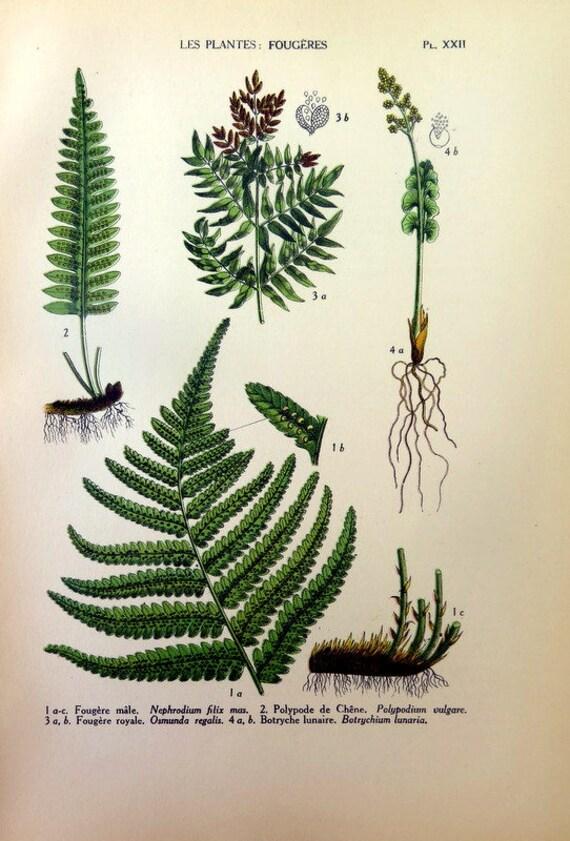 Ancient Ferns Plants Print 1927 Original Vintage Color Plants Etsy