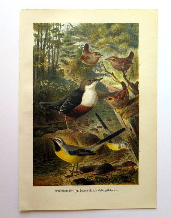 1878 Bird Original Antique Lithograph Antique birds wall decor Old print bird Vintage bird prints Antique bird print Bird wall art
