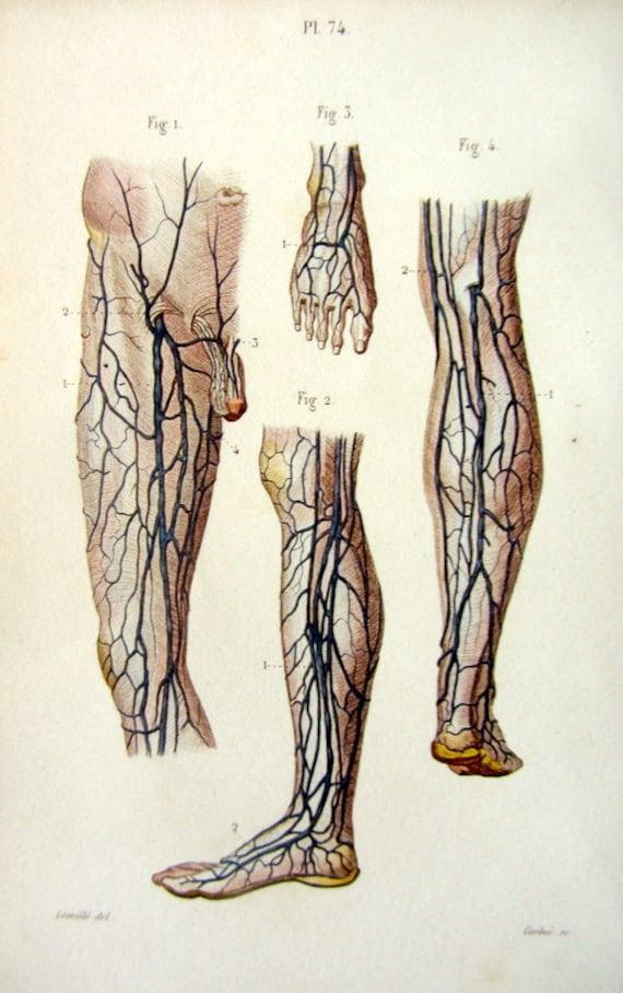 1852 Vintage menschlicher Fuß und Bein Anatomie | Etsy