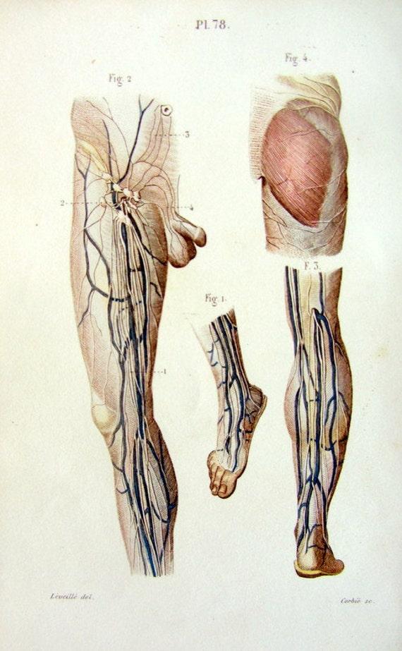1852 antike Lymphsystem Druck von Fuß und Bein Anatomie alten | Etsy