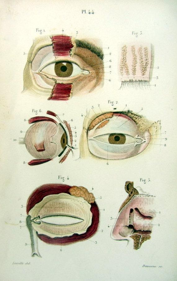 1852 Gorgeous Antique Anatomy Eyes Print Human Organ Of Etsy