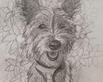 Daisy, Silky Terrier Puppy