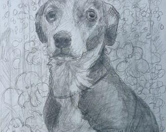 Pet Portrait, Pitbull Sad Eyes