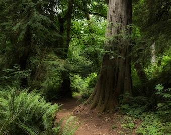 woodland fantasy etsy