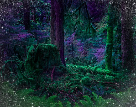 Image result for enchanted woods