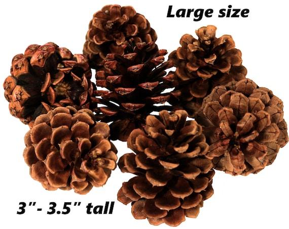 Wreath Craft Supplies Floral Crafts Perfect for Crafting All Natural Oregon Pinecones 50 Medium Ponderosa Pine Cones