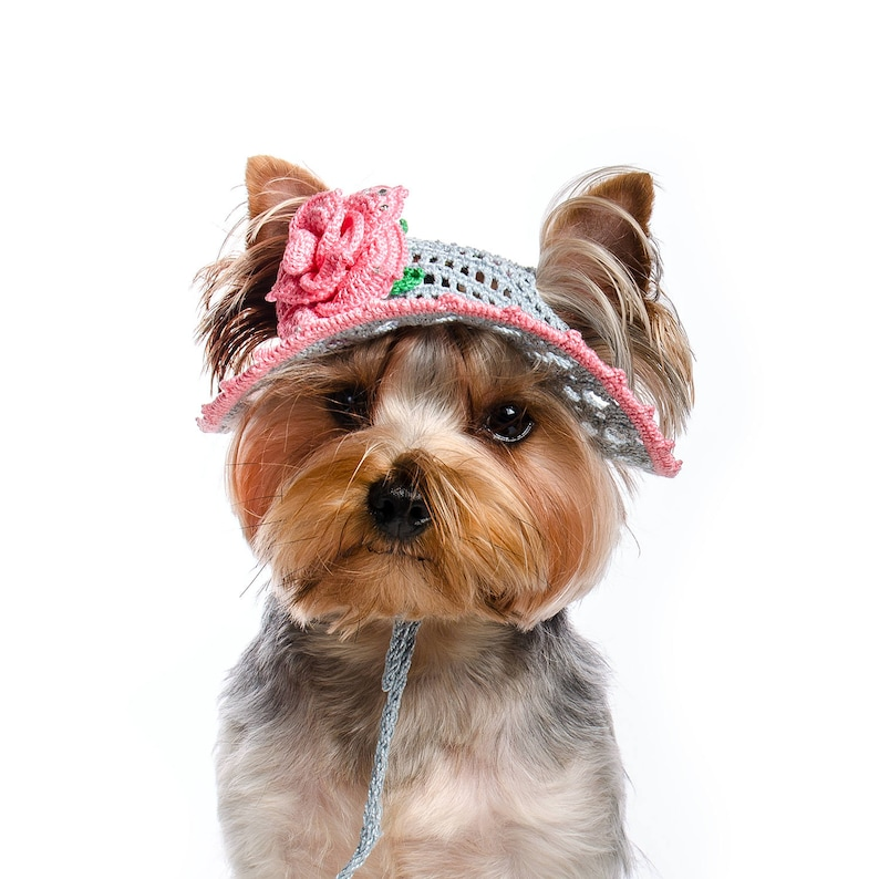 e3b2a410f Hat for dog