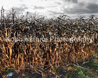 Fall corn field photography, Agricultural print, Nature photography, Corn and clouds prints
