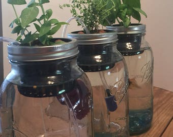 Indoor aquaponics kit/Mason jar aquaponics system/indoor herb garden