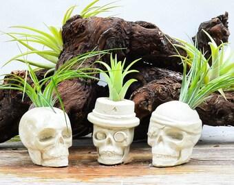 Concrete Skull Planter, Air Plant Kit, Skull Air Plant Holder, Creepy Plant Display, Pirate Skull, Fancy Skull, Cute Gift Ideas!