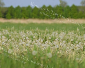 MIT Dandelion Field Digital Background