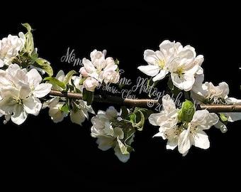 MIT Blossom Branch Digital Overlay