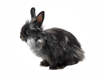 MIT Fluffy Rabbit Digital Overlay