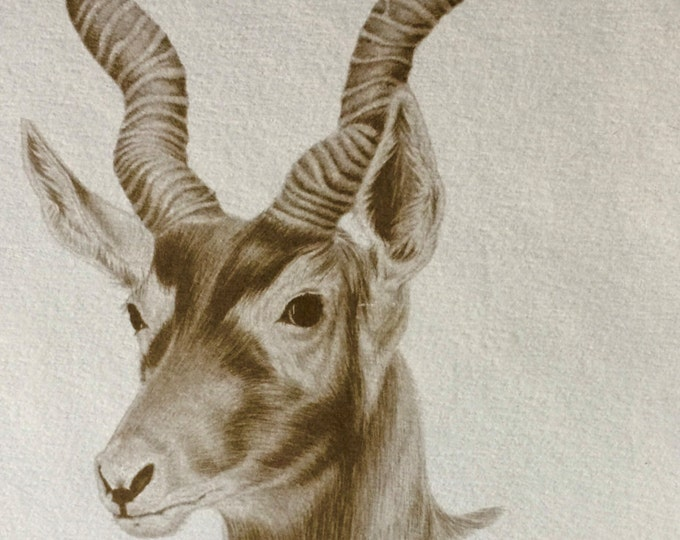 Vintage postcard, vintage art, black buck, P. Harvey print, 1977, Buena Vista, Exotic animal paradise, vintage advertisement, Jerry Jones