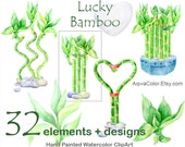 Lucky Bamboo - watercolor floral clipart commercial use Room home bamboo plant greenery wedding love plant Valentine day wild plant png