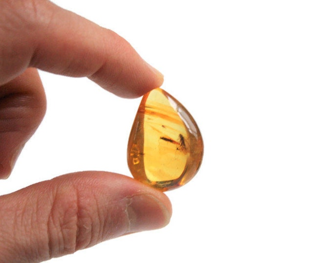 AMBER Insect Stone, BALTIC Amber Cabochon with Insect, Golden Amber Bead, Amber Cab for Ring, Amber Cab for Pendant, Amber Inclusion Stone
