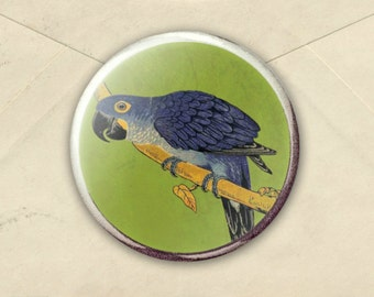 Parrot fridge Magnet, bird lover magnet, bird office decor, gift for parrot lover, vintage parrot illustration - parrot prize - bird prize