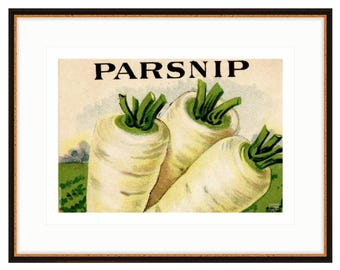 Parsnip print, detail from old stone lithograph seed pack. Three sizes, two frame options. Free Shipping