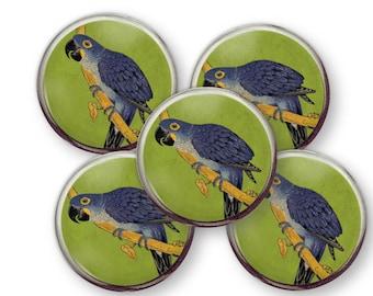 Parrot fridge Magnet, bird lover magnet, gift for parrot lover, vintage parrot illustration