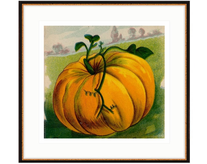 Garden Lovers Framed pumpkin print from 1916 vintage seed pack. Three sizes, two frame options. FREE SHIPPING