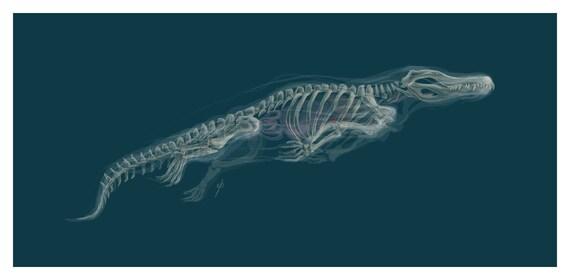 Fantasma cocodrilo arte Giclee anatomía esqueleto