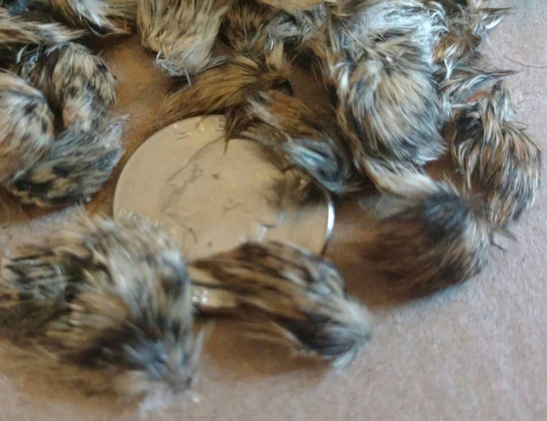 Taxidermy 50 Teeny Tiny Baby Quail Wings 6 Bonus Bigger Wings Etsy