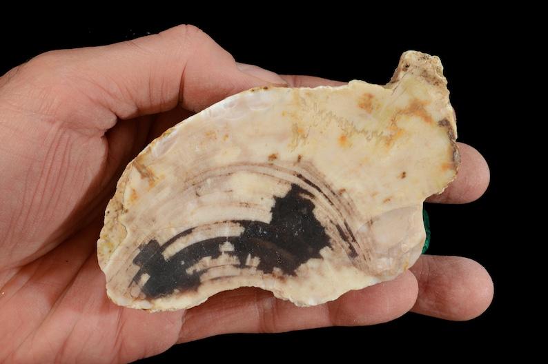 "Icicle Jasper 3/"" 2-3 Oz Polished Rock Mineral Root Chakra Healing Reiki Crystal"