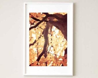 Nature photography, nature print, nature wall art, nature art print, amber wall art, amber decor, amber home decor, mother nature art print