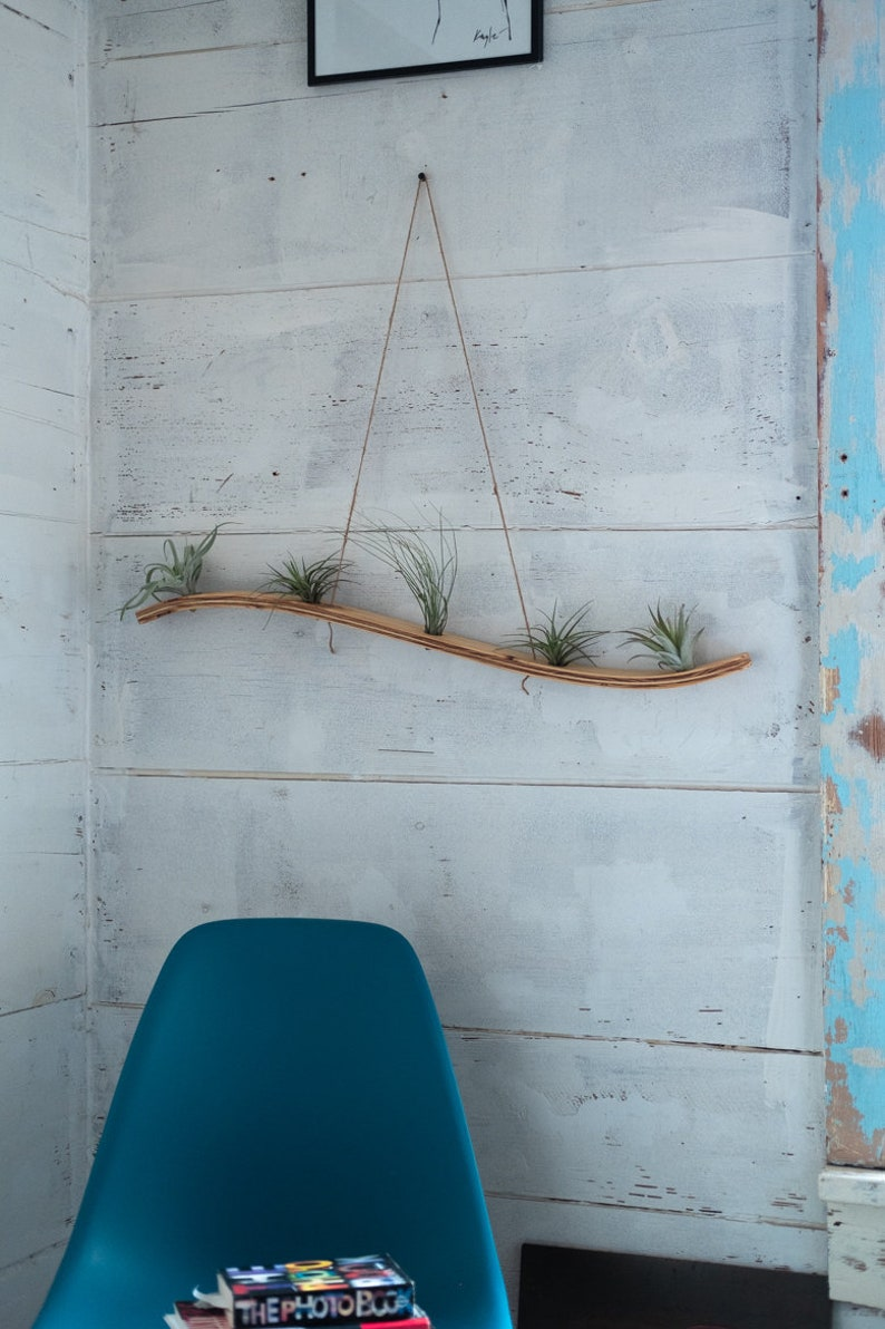 Large Wave Air Plant Hanger Air Plant Holder Bent Wood Air image 0