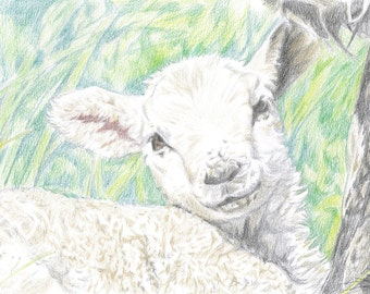 color print of lamb in mothers shadow