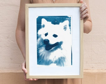 Japanese Spitz Dog / Cyanotype Print on Watercolor Paper / Limited Edition / A4