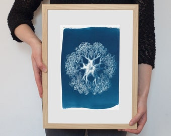 Abstract Organism Cyanotype Print on Watercolor Paper, Hand printed, Coral Prints, Beach Wall Art, Botanical Art, Anatomical Art