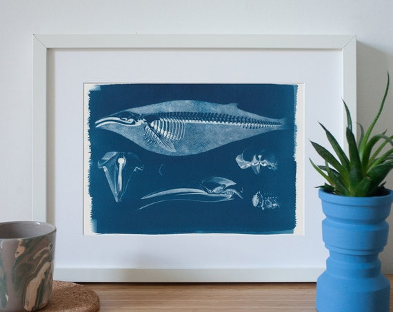 Whale Skeleton Cyanotype Print on Watercolor Paper, Nautical Art, Animal Print, Botanical Art, Coastal Decor, Vintage Scientific Drawing