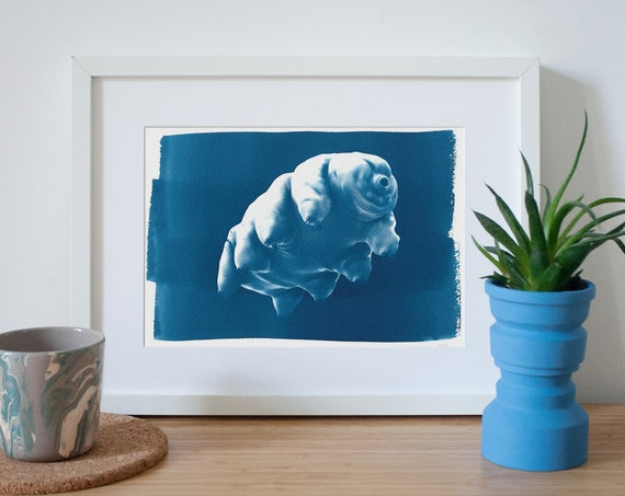 Handmade Cyanotype Print of a Water Bear or Tardigrade on Watercolor Paper, Science Gift,  Microscopic Art, Moss Piglet, Limited Edition