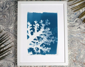 Coral Shadow Handmade Cyanotype Print on Watercolor Paper, Limited Edition