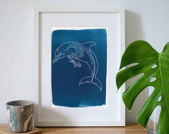 Handmade Dolphin X-Ray Cyanotype Print on Watercolor Paper, Gifts For Her, Nautical Art, Animal Print, Design Decor, Coastal Decor